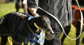 Sandown Park Preview: Packed with Punch