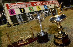 Boxes drawn ahead of group 1 extravaganza