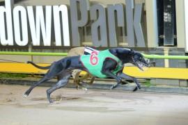 2017 RSN Sandown Cup – what a field