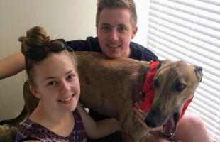 Golden Nugget found in greyhound adoption