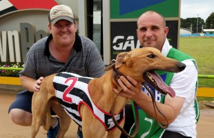 Giveaway greyhound producing the goods