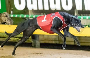 Miriam marvellous in ANZAC Appeal Cup