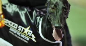 Flynn flies in Speed Star