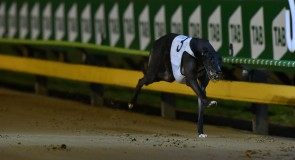 Lucy's Milo scratched from Speed Star
