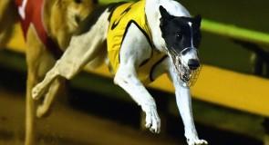 Tornado Tears favourite for RSN Sandown Cup