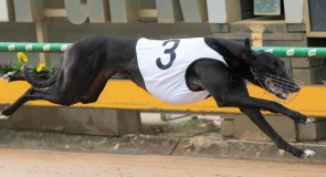 Stayers and sprinters to clash in McKenna heats
