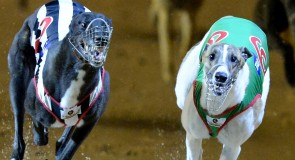 The Greyhound of the Decade!