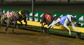 Sandown tonight – what to watch for