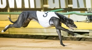 Houdini Boy dominant on middle distance debut