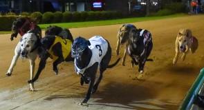 Top dogs set sights on Sandown Park