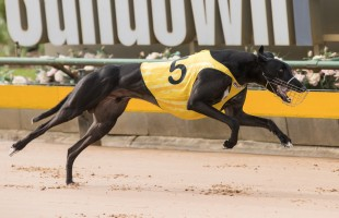 Fastnet scratched, Rebellious to fly the flag